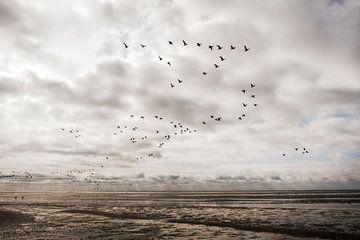Fliegende Vögel über dem Strand von Ameland von Van Kelly's Hand