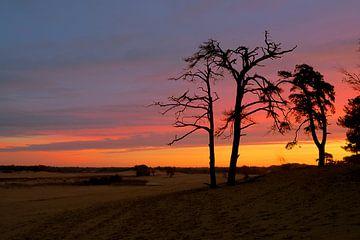 Zonsopkomst in Nationaal park de Loonse en Drunense duinen van Henk Elshout