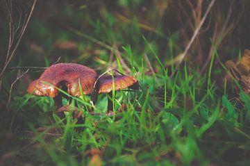 Pilze im Herbst von Claire Groeneveld