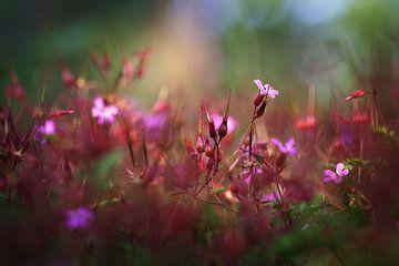 roze en rood kleurenpalet von Hanneke de Vries-Koning