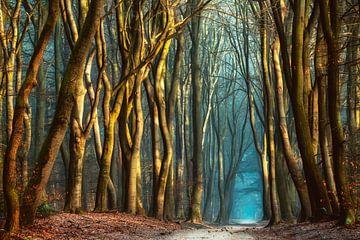 Ein magischer Morgen von Lars van de Goor