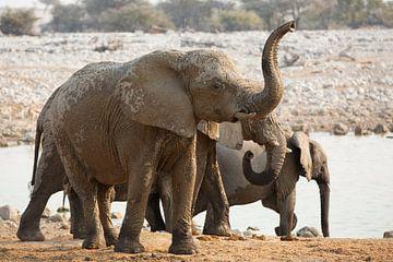 Retteketetter Olifanten trompetter van