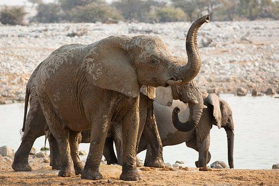 Retteketetter Olifanten trompetter