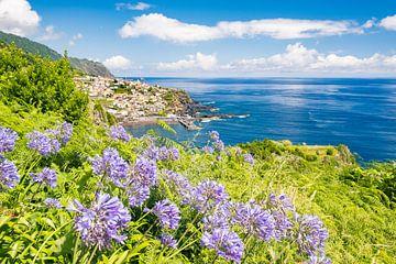 Lelie van de Nijl bloemen op het eiland Madeira van Sjoerd van der Wal