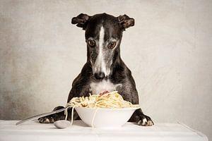 Pasta! Windhund
