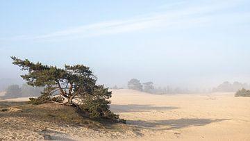 Der Morgennebel löst sich über der Wekeromse Zand auf von Bas Ronteltap