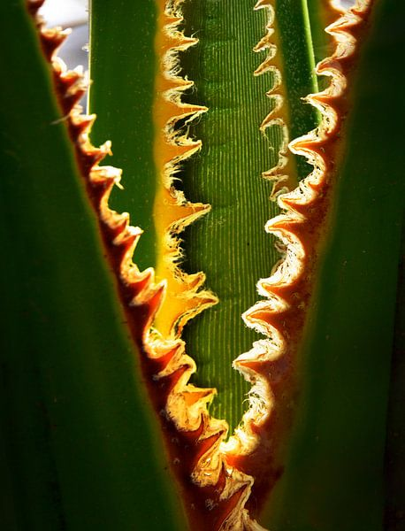 Palmboom van Harrie Muis