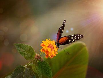 Vlinder van Angela R.