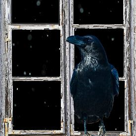 Vue de la fenêtre - Corbeau sur Christine Nöhmeier