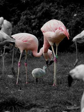 Pflegende Flamingos von Chloë Luyckx