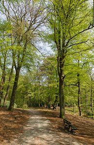 Staand panorama bospad met zitbank in het Spanderswoud, 's-Graveland, Wijdemeren, Netherlands