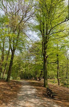 Staand panorama bospad met zitbank in het Spanderswoud, 's-Graveland, Wijdemeren, Netherlands sur Martin Stevens