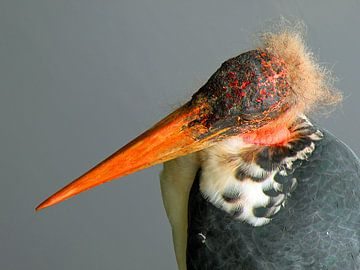 Vogel van Frank Kleijn
