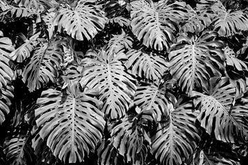 Blattwand in Schwarz-Weiß von Bianca ter Riet