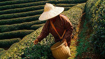China-Tee-Garten von Oscuro design
