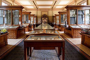 Fossielenzaal - Teylers Museum van Teylers Museum