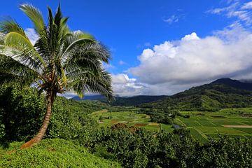 Palmboom van Antwan Janssen