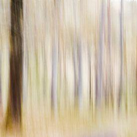 Het feeërieke bos van Danny Budts