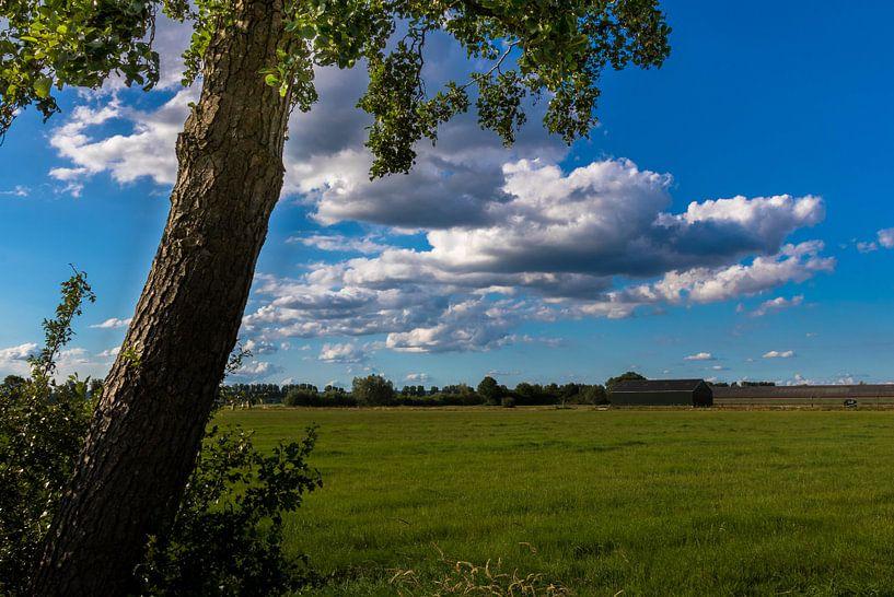 Uitzicht op de landerijen van Devlin Jacobs