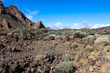 Landschaft im Teide National Park auf Teneriffa von Reiner Conrad