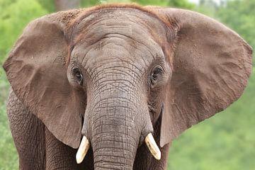 Portret van een olifant van Tazi Brown