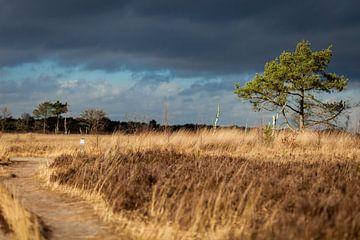 Kalmthoutse Heide van Elly Damen
