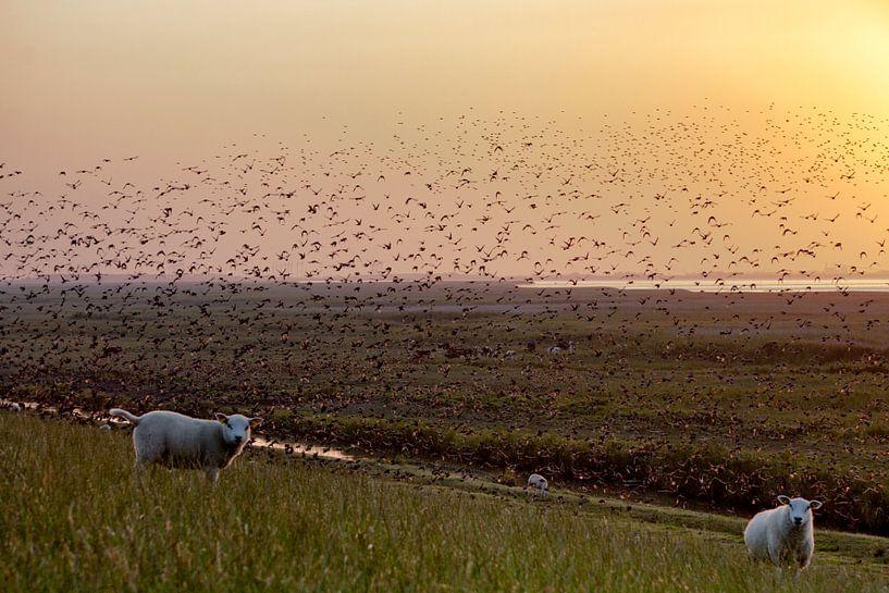 Schapen op dijk bij zonsondergang van Jan Sportel Photography