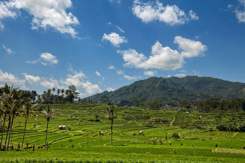 Indonesië - groene rijstterrassen in Bali van Tjeerd Kruse
