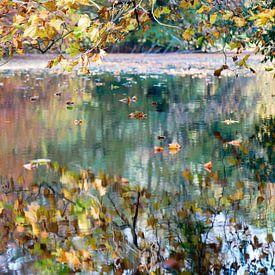 spiegel in het bos van Hanneke Luit