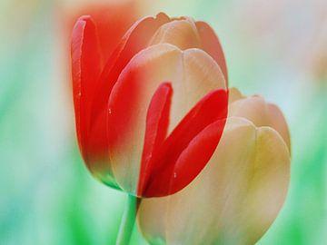 Tulip Art1 van Hugo Kuijper