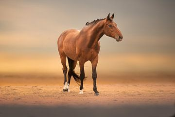 cheval sur la plage de sable sur Kim van Beveren