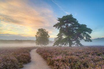 Morgennebel in der Westruper Heide von Michael Valjak