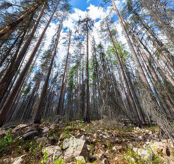Zweeds bos Fermansbo Urskog Nature Reserve van Marcel Kerdijk