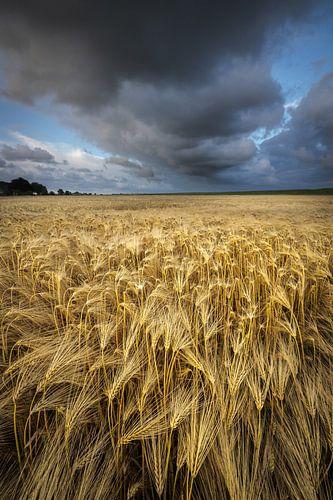 Graanvelden Groningen - Donkere wolken drijven over de graanvelden in het Hoge Land van Groningen ti