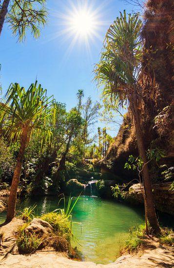 Oase in Isalo Madagaskar van Dennis van de Water