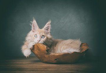 Creme maine coon Kätzchen Kunsttier-Portrait von mirka koot