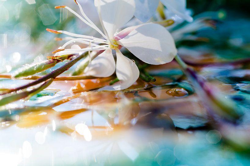 Macrofotografie witte bloem van Edith Lüthi