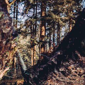 Reflectie bos in water herfst kleuren van Maarten Mooijman