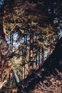 Reflectie bos in water herfst kleuren van