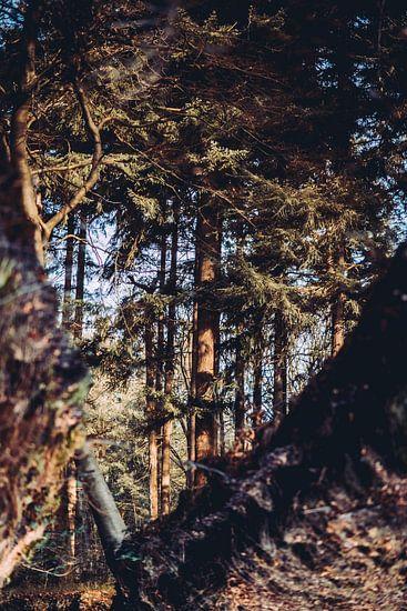 Reflectie bos in water herfst kleuren
