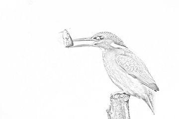 Tekening IJsvogel van Robert van Brug