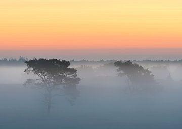 Bomen in de mist op Kalmthoutse Heide van Jos Pannekoek