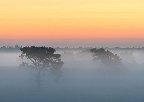 Bomen in de mist op Kalmthoutse Heide van