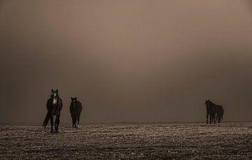 die Pferde von benjamin Gilson