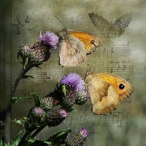 Vlinders op een distel van Carla van Zomeren