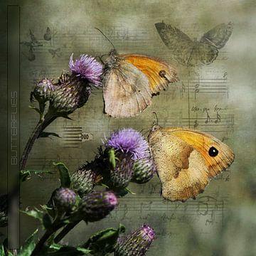 Schmetterlinge an einer Pflanze von Carla van Zomeren