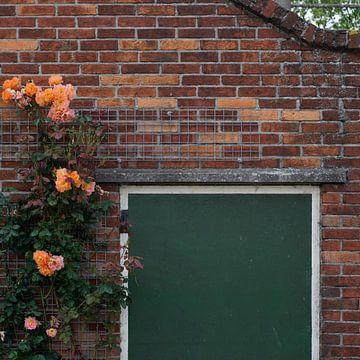 Climbing Roses - 2016 von Timmy Bouwmann