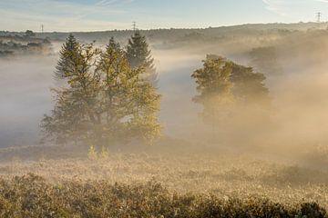 landschap op de zuid limburgse heide van Francois Debets