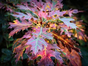 Herbstblätter von Rob Boon