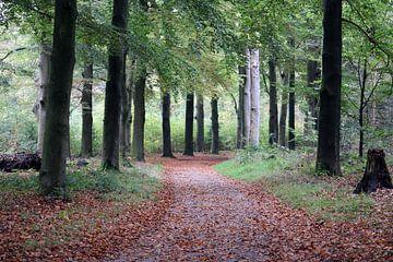 Herfst in het bos van Clicksby JB